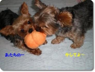 20110903232800.jpg