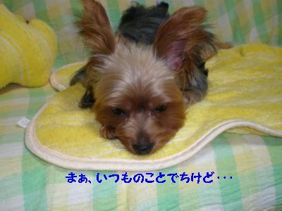 20110917223221.jpg