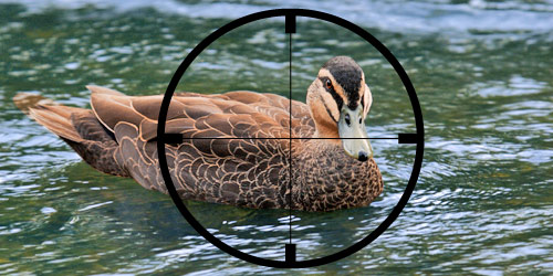 500-duck-shooting.jpg