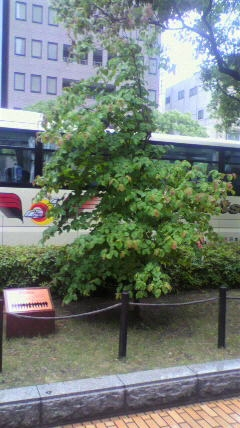 Jフレ記念樹