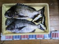 魚太郎チヌアップ