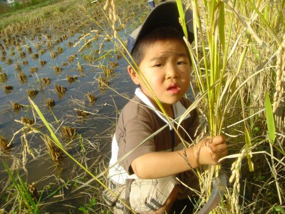 rice2013.jpg