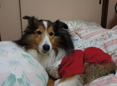 ベッドで (8)