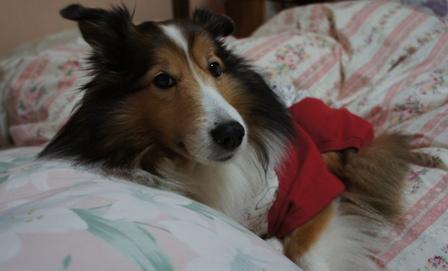 ベッドで (2)