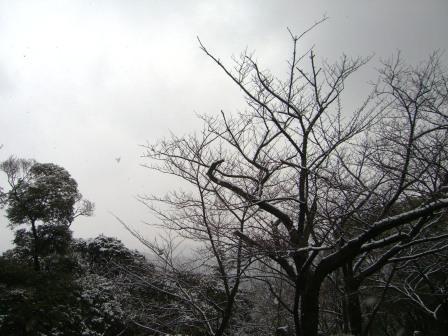 雪の公園 (7)