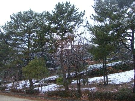 雪の公園 (2)