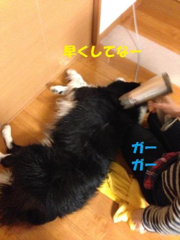 IMG_7153 - コピー