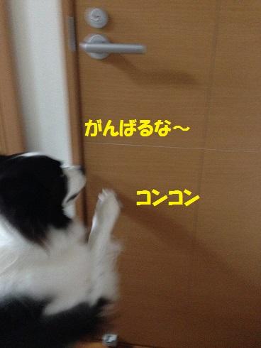 IMG_6188.jpg