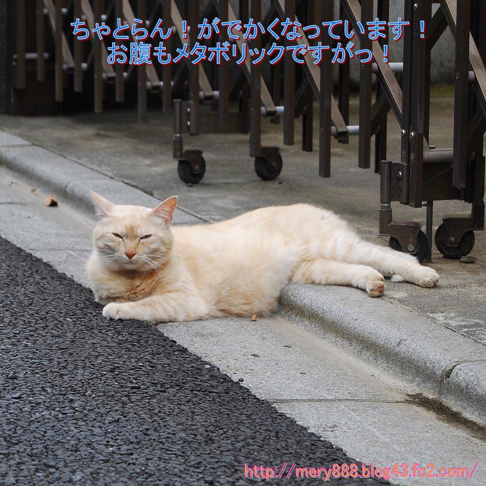 ちゃとらん2010_06_27_001