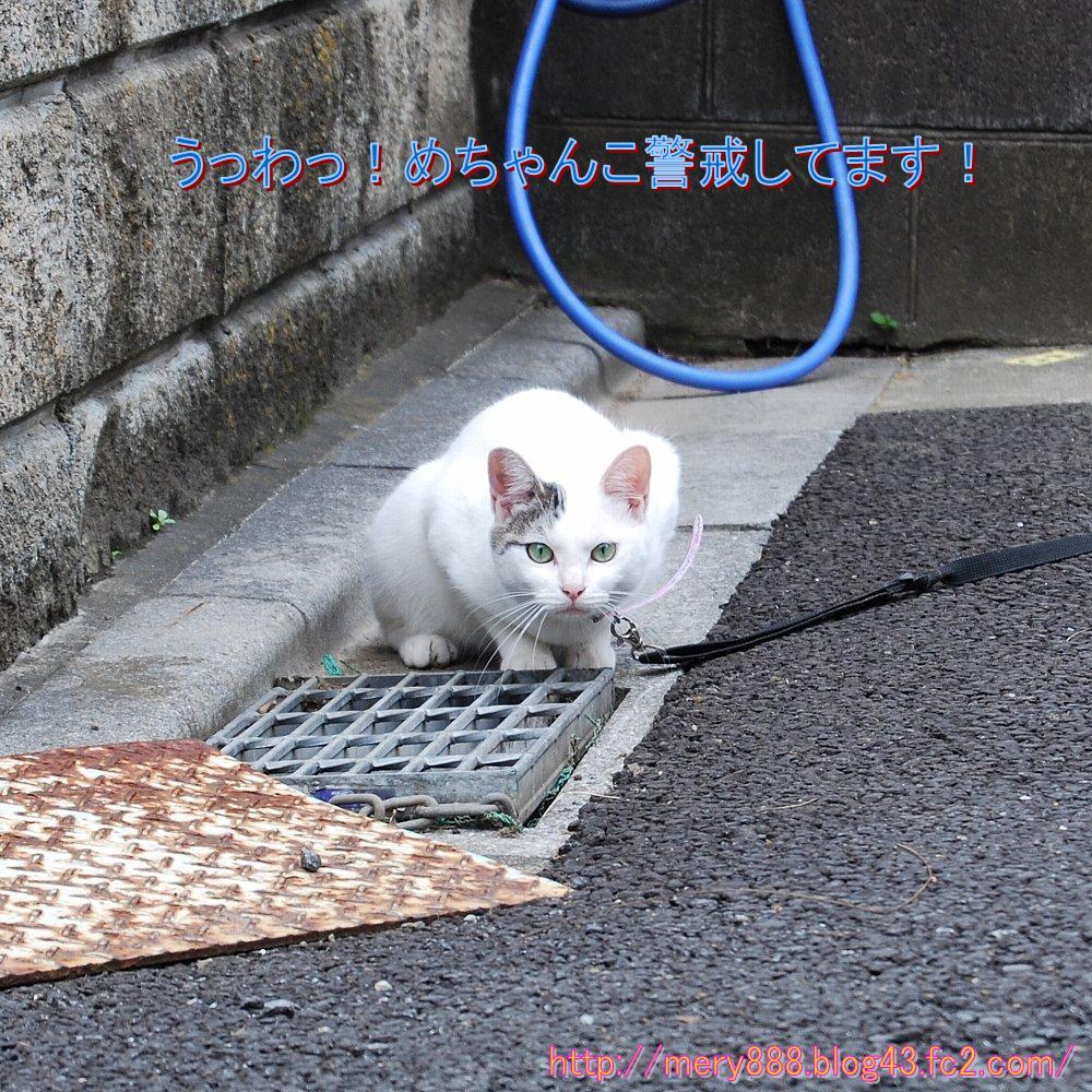 白い猫2010_06_27_001