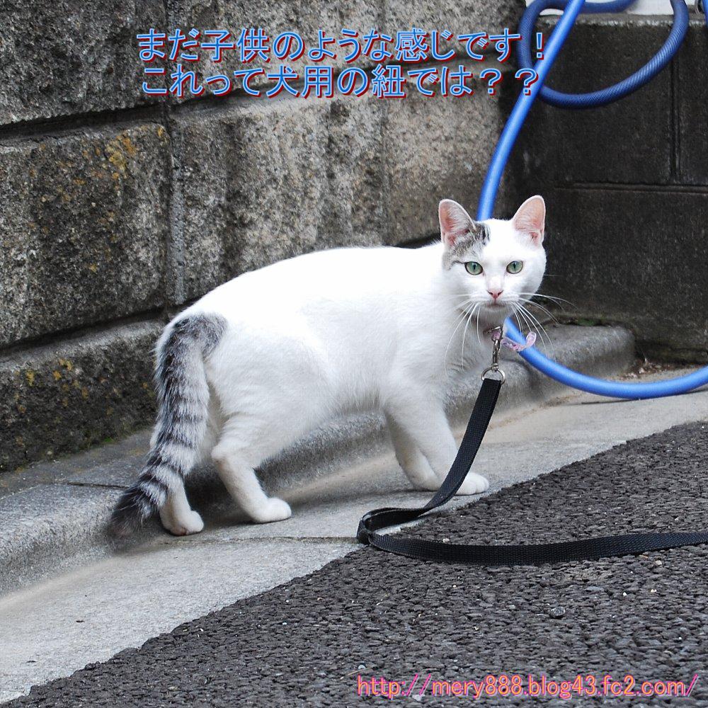 白い猫2010_06_27_002