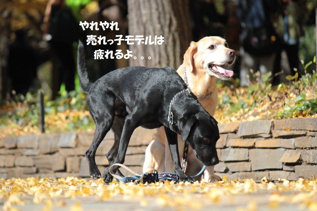 IMG_7456_20131113184239206.jpg