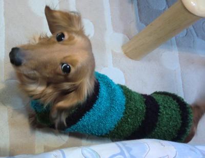 新作セーター