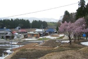 桜と野田沢集落