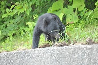 014熊7