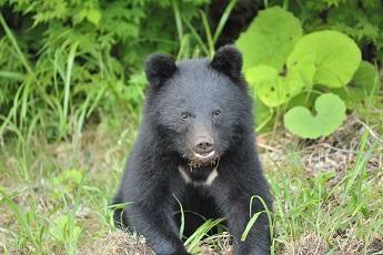 015熊8