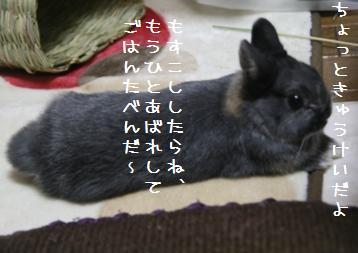 20110220_06.jpg