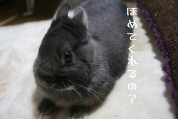 20110306_01.jpg