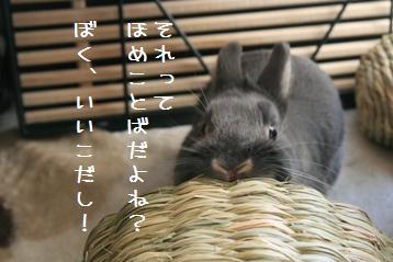 20110306_03.jpg