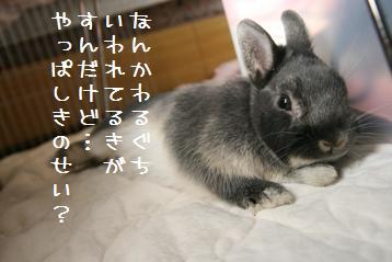 20110319_03.jpg