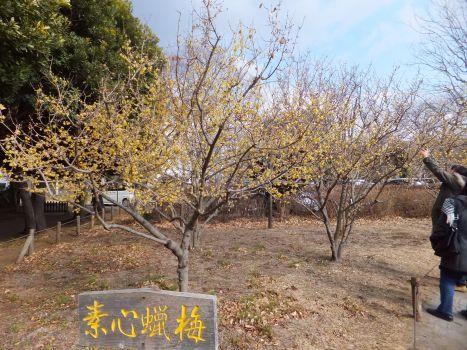 忠生公園2