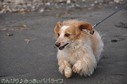 tateyama201302019.jpg