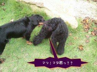 13_42_37-picsay.jpg