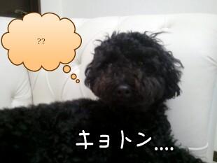 18_27_12-picsay.jpg