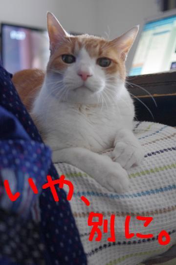 3_20130202094944.jpg