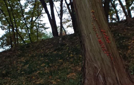 2011.11.いつだっけ? 紅葉ピクニック 19