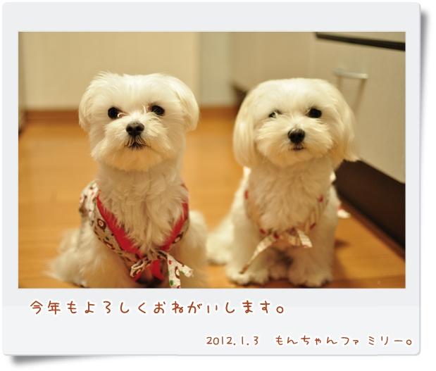 DSC_0044_20120103211305.jpg