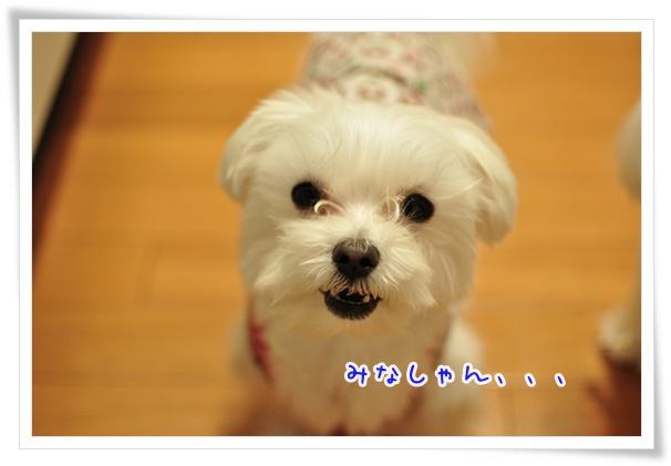 DSC_0067_20120103205420.jpg