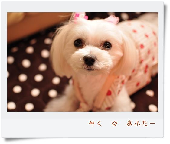 DSC_0303_20120108124630.jpg