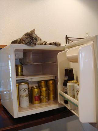 ビールの入った冷蔵庫