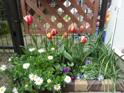その後の花壇B