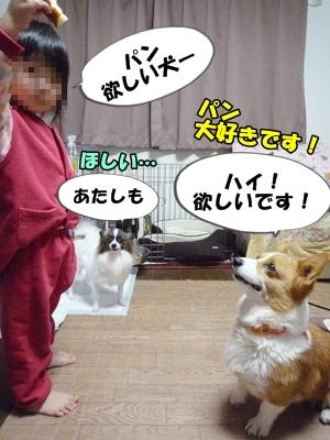 ふじこP1260089