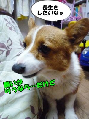 ふじこP1260080