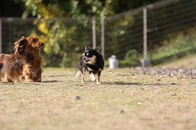 空中犬IMG_4874