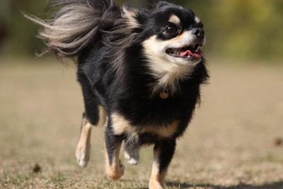 空中犬IMG_3928