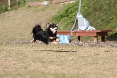 空中犬IMG_4006
