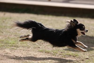 空中犬IMG_3821