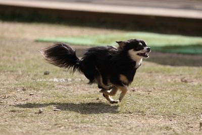 空中犬IMG_3819