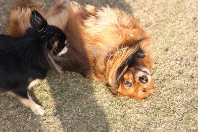 空中犬IMG_5213