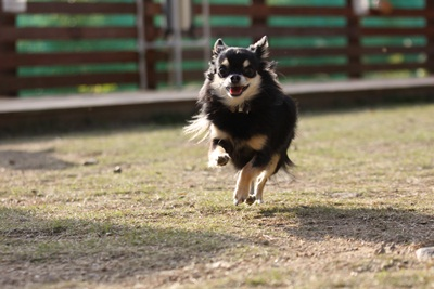 空中犬IMG_4968