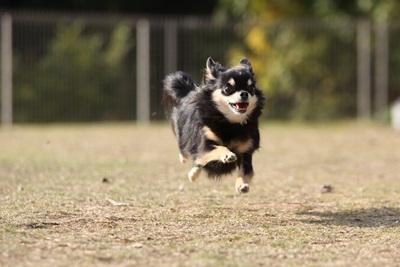 空中犬IMG_4909