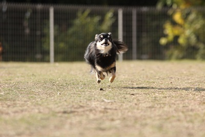 空中犬IMG_4907