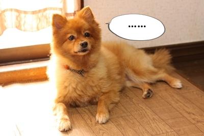 カプリ子IMG_3683