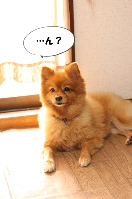 カプリ子IMG_3680