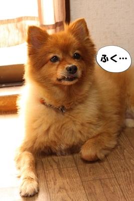 カプリ子IMG_3705