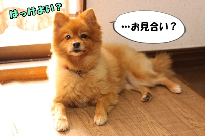 カプリ子IMG_3684